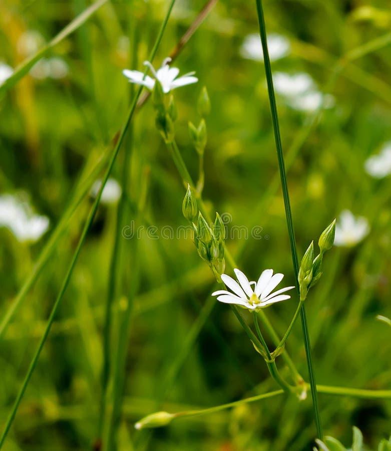White flowers stock photo. Image of blue, background - 99043402