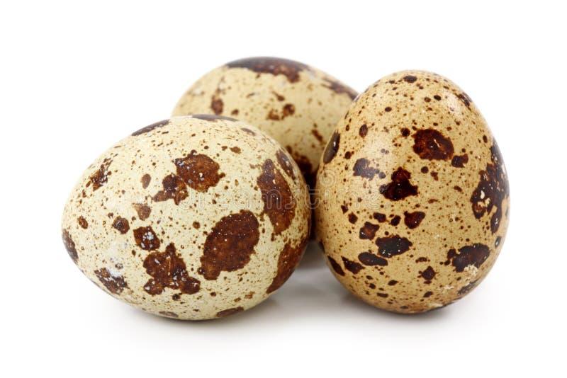 Common Quail eggs