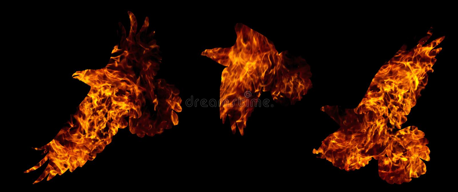 Common raven are fire isolated on black. Isolated objects, art, fire royalty free stock image