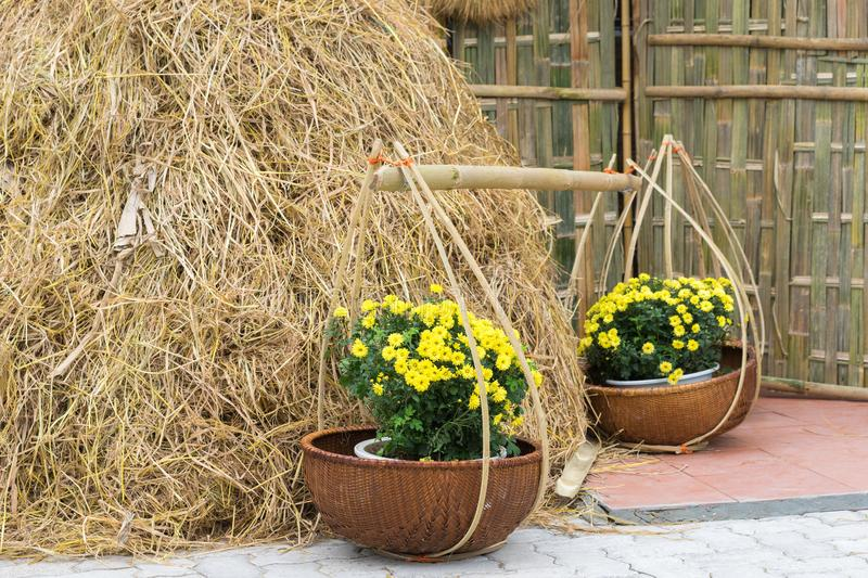 Common scenery in Vietnam rural countryside with baskets of yellow daisy flowers, tropical rice straw royalty free stock photography