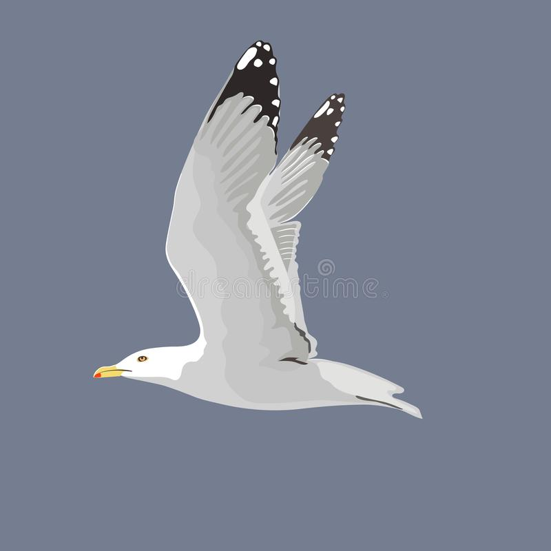 The common seagull mew gull European herring gull. Vector illustration. Element for your design. Flying bird, white feathers. Yellow beak, outspread wings stock illustration