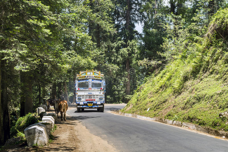Common sight of transportation truck and cattle on street of India. Colorful truck negotiate turn at road corner with lush greenery stock photos