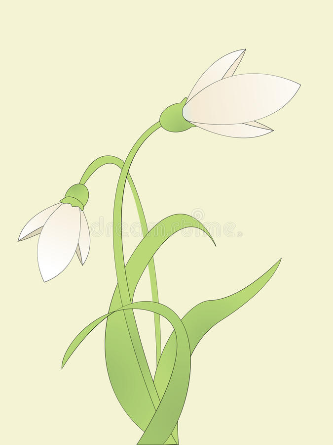 Download Common snowdrop stock vector. Illustration of stem, nature - 17654149