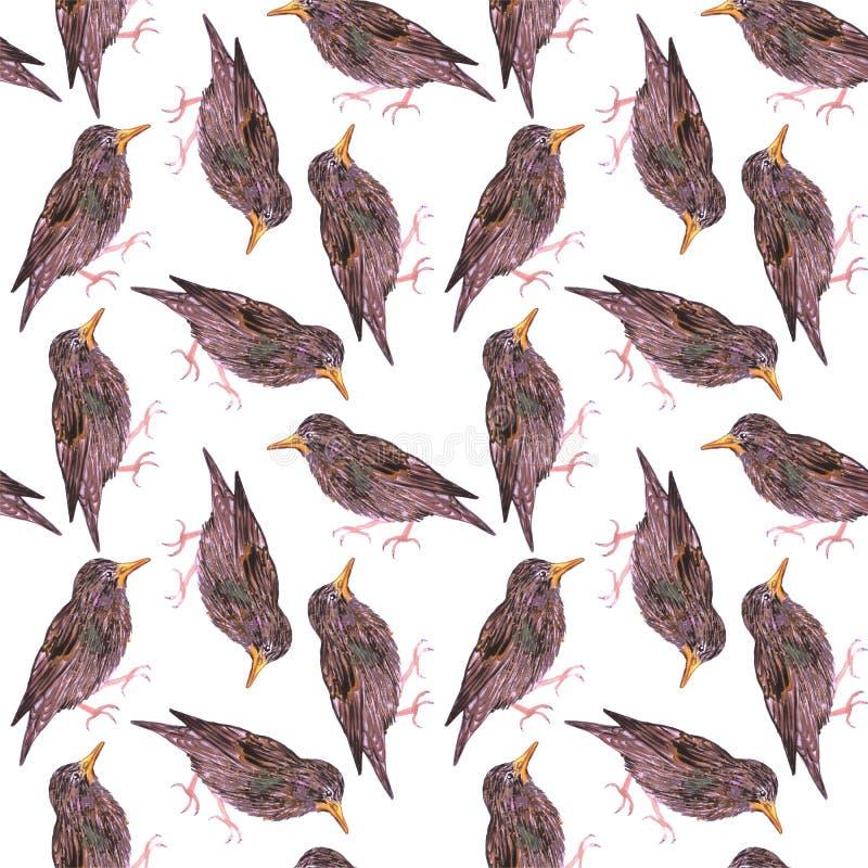 Common starling or European starling or Sturnus vulgaris bird seamless watercolor birds painting background.  royalty free illustration