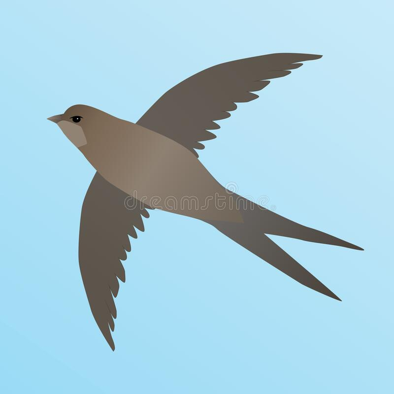 Free Common Swift Flying In The Air Royalty Free Stock Photos - 184440488