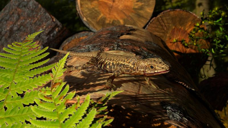 Common Wall Lizard on firewood stock photo