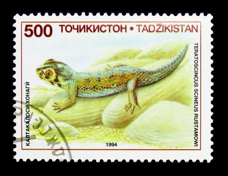 Common Wonder Gecko (Teratoscincus scincus), Lizards serie, circa 1995 royalty free stock images