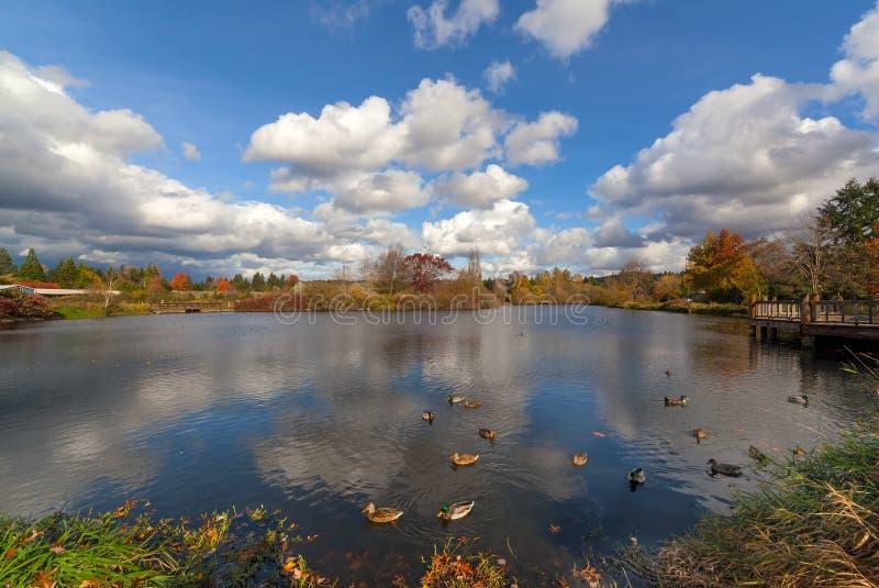Commonwealth湖公园在Beaverton俄勒冈美国 免版税库存照片