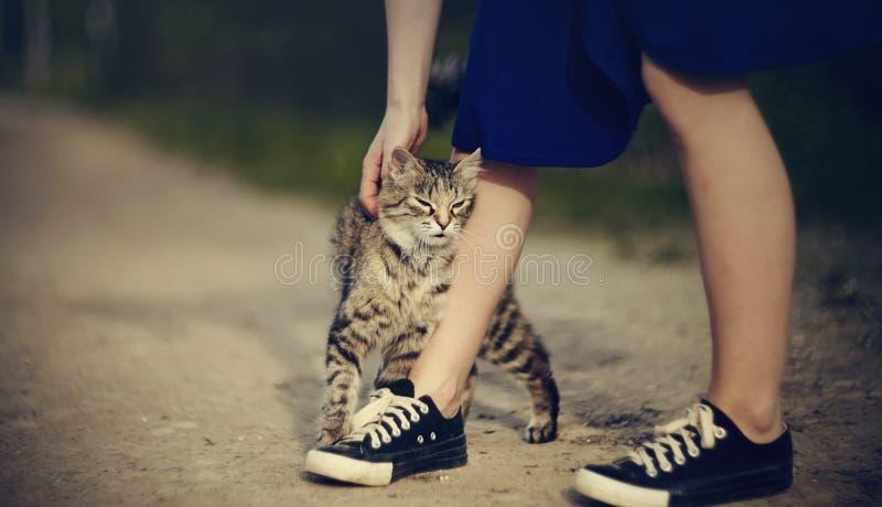 Communicatie met grijze gestreepte verdwaalde kat stock afbeelding