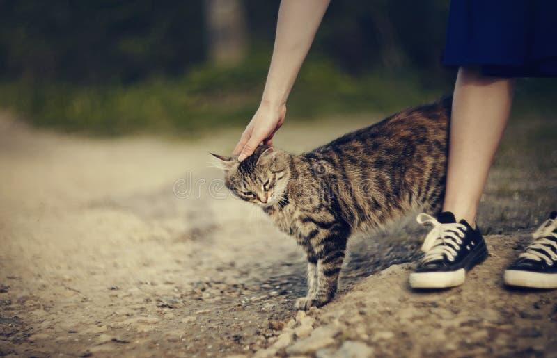 Communicatie met grijze gestreepte verdwaalde kat stock foto's
