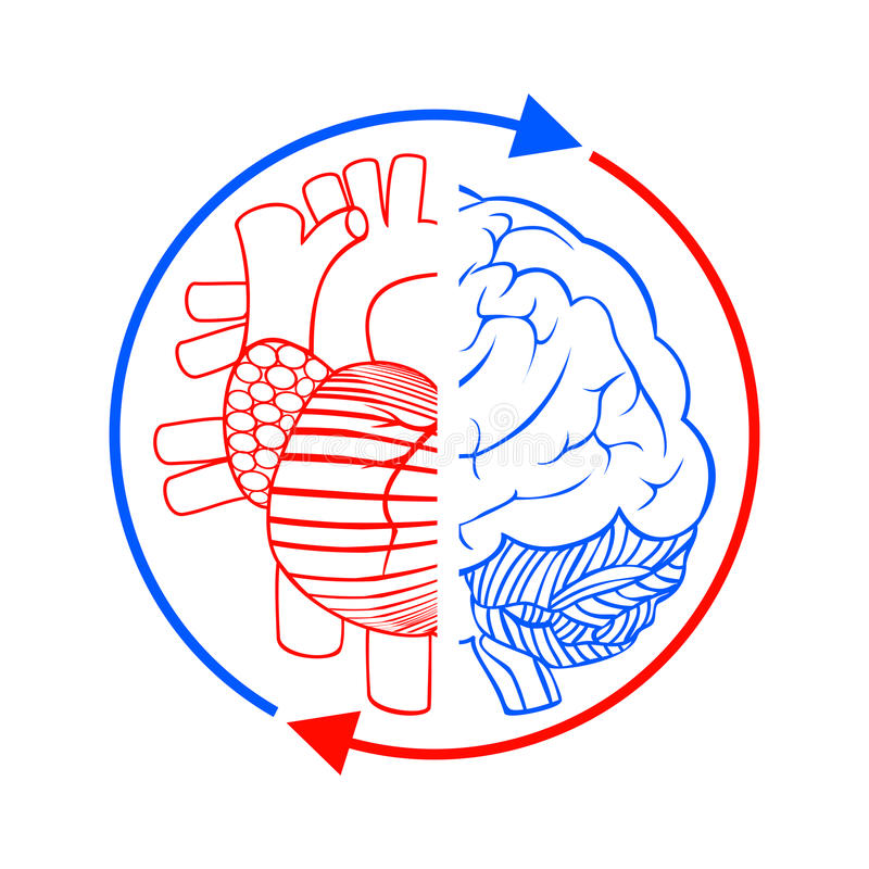 Communication the brain and heart vector illustration