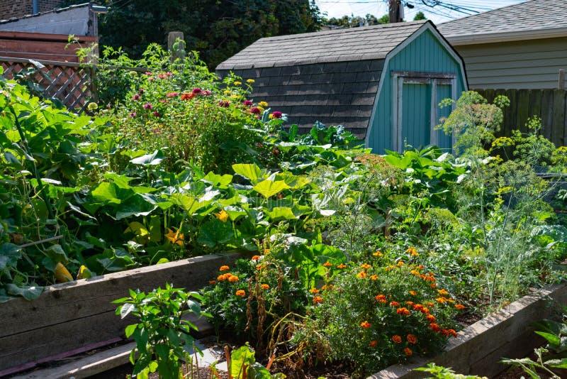 Community Garden de Logan Square Chicago avec des plantes et un shed photographie stock libre de droits