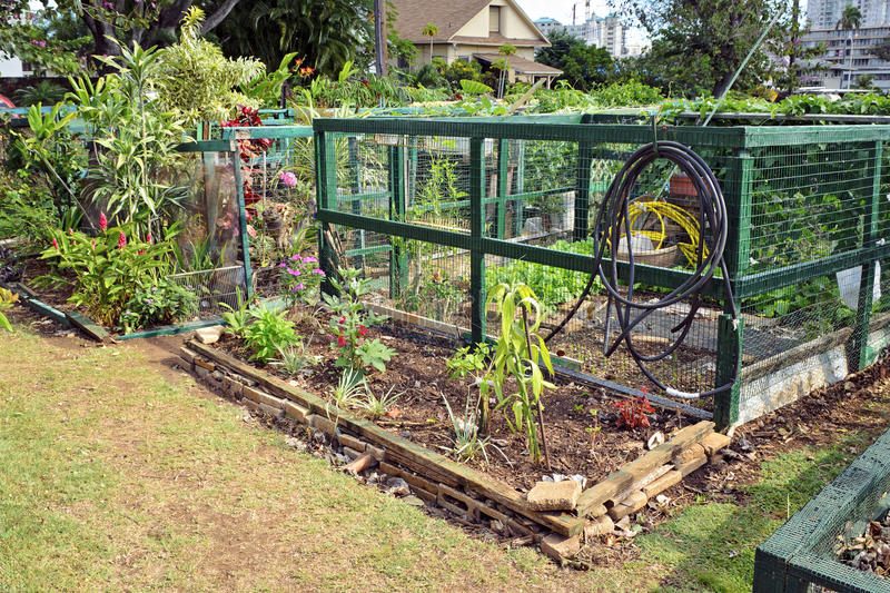 Download Community gardens stock image. Image of fenced, community - 25666389