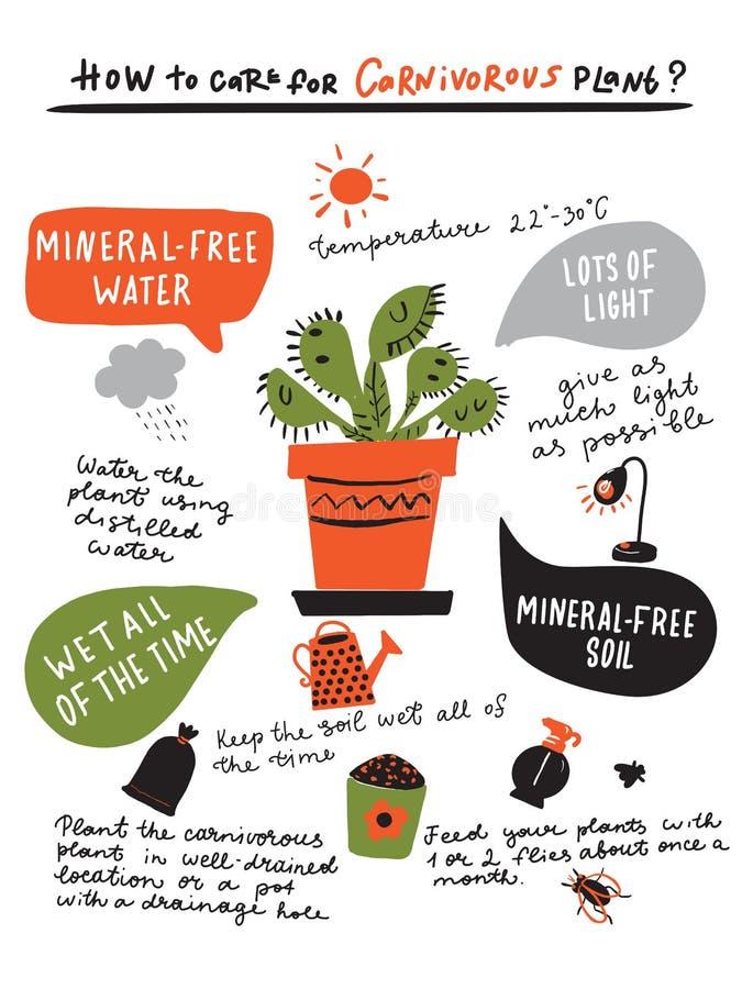 Como crescer a planta carnívora Mão bonito infographic tirado sobre o cuidado do flytrap de venus Ilustração do vetor ilustração do vetor