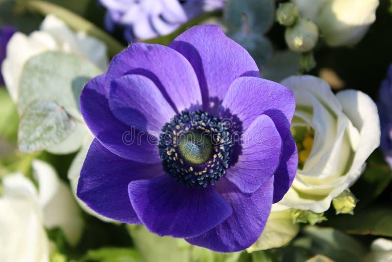 Como floresce uma flor da mola fotografia de stock