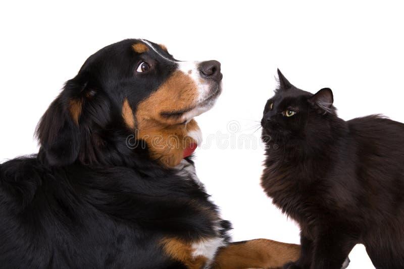 Como gatos e cães imagem de stock royalty free