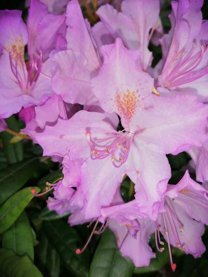 Como una flor y natural fotografía de archivo libre de regalías