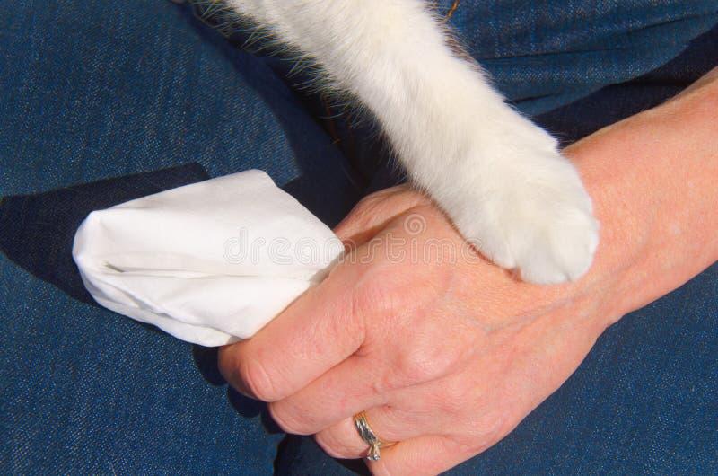 Comodidad de las relaciones del compañerismo del animal doméstico fotos de archivo