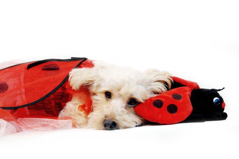 Compagni con il Ladybug fotografia stock libera da diritti