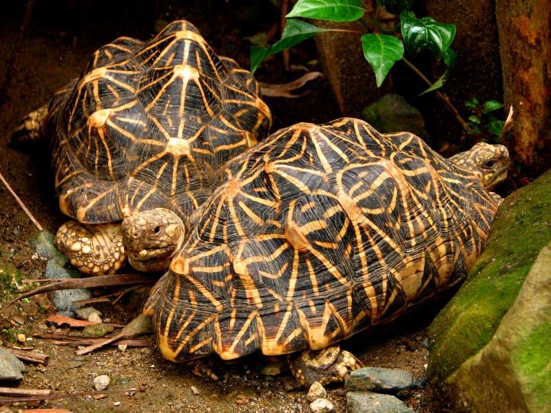 Companheiros da tartaruga fotografia de stock royalty free