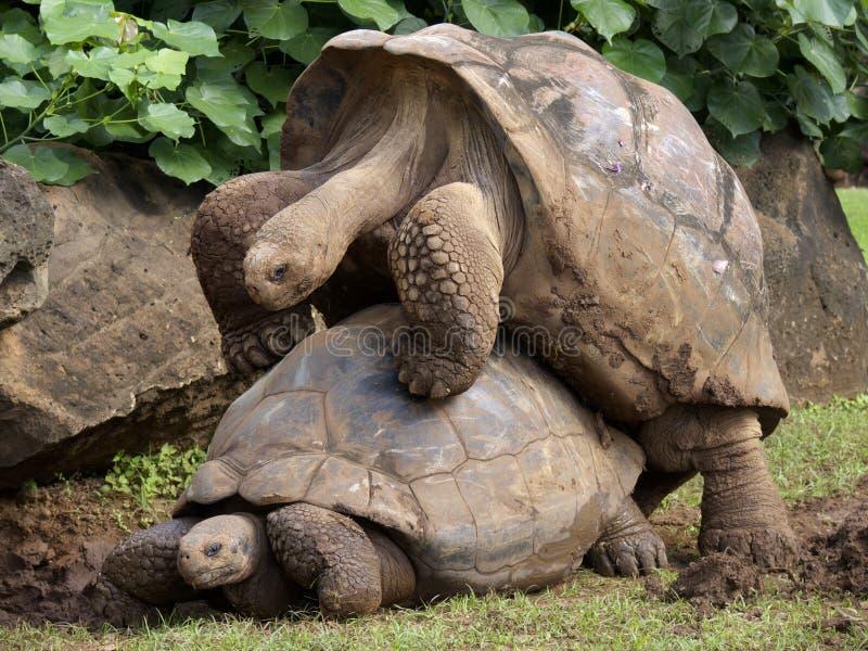 Companheiros de Galápagos imagem de stock