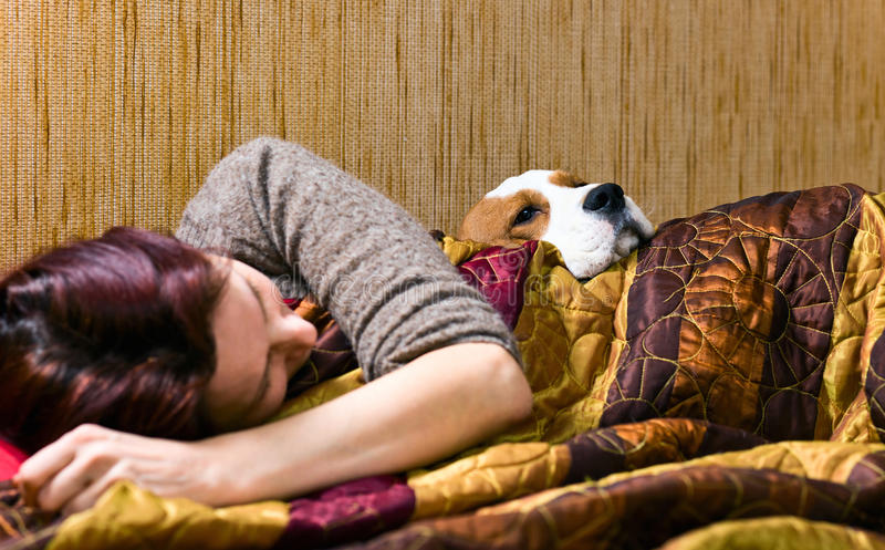 Companion. The sleeping woman and its dog , focus on a dog royalty free stock photography