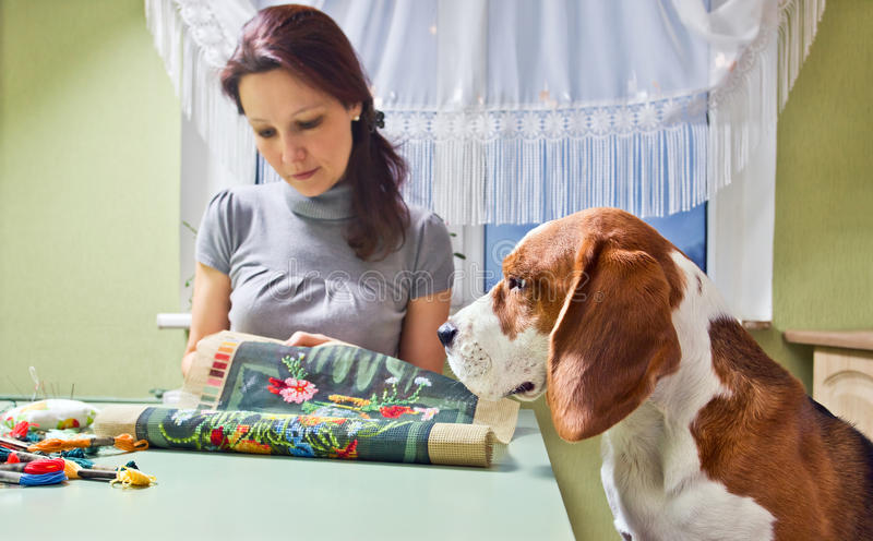 Companion. The dog looks as the mistress embroiders royalty free stock photo