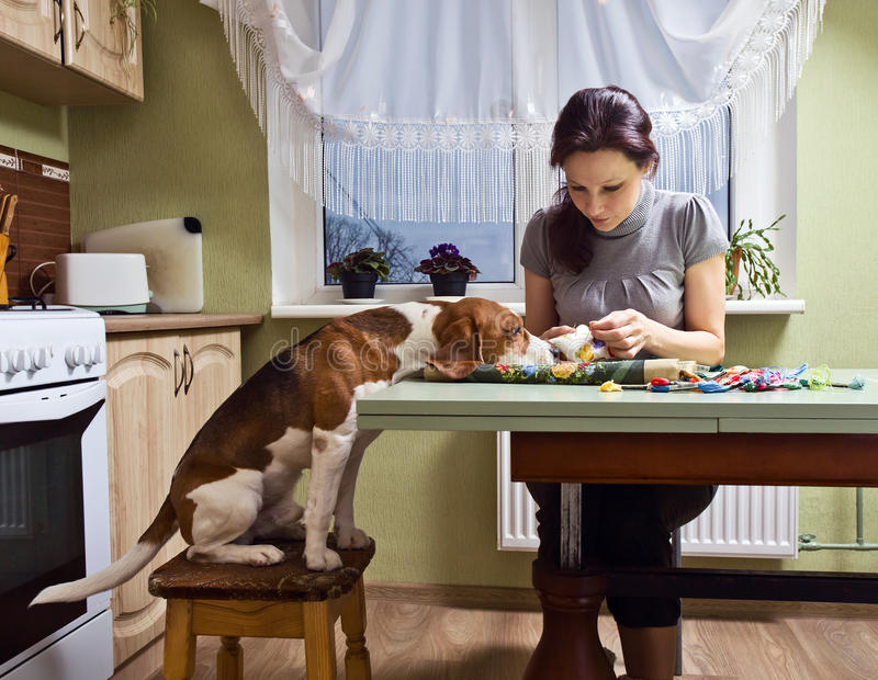 Companion. The dog looks as the mistress embroiders stock photography