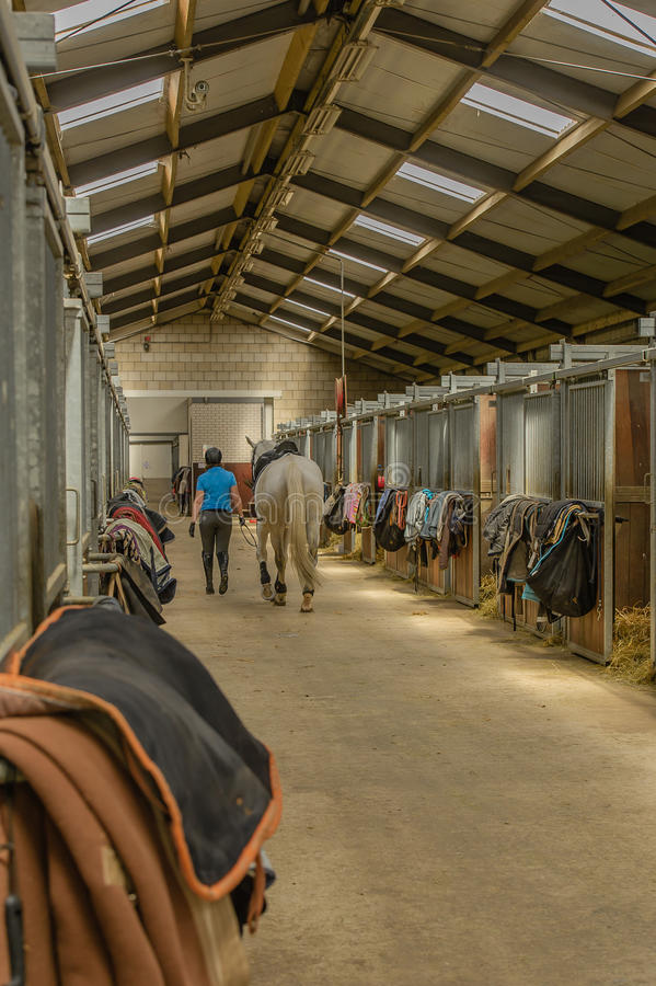 Companion Animals - Horses. Interior of the corridor with horse stables of a riding school stock photos