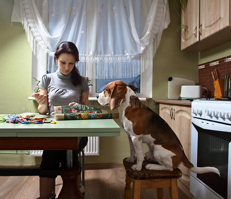 Companion. The dog looks as the mistress embroiders royalty free stock photography