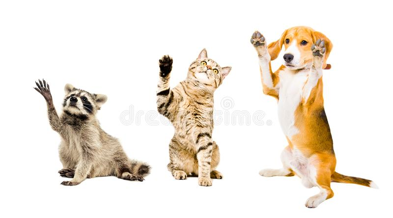 The company of playful funny animals. Isolated on white background stock photo