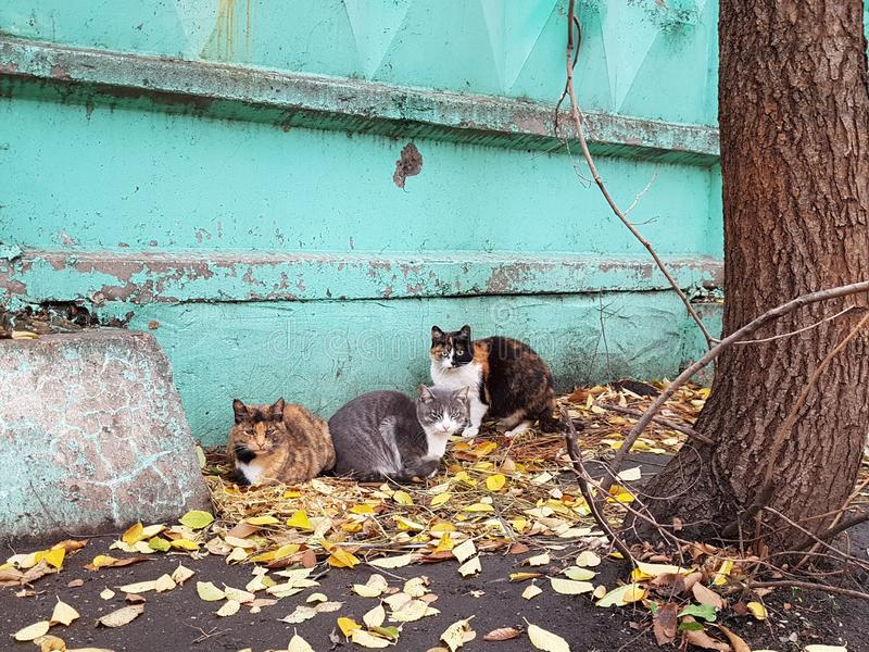 A company of stray cats sits under a concrete fence and looks angrily in front of him. royalty free stock photo