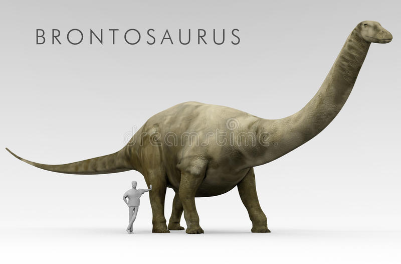 Comparação do tamanho do Brontosaurus e do ser humano do dinossauro ilustração royalty free