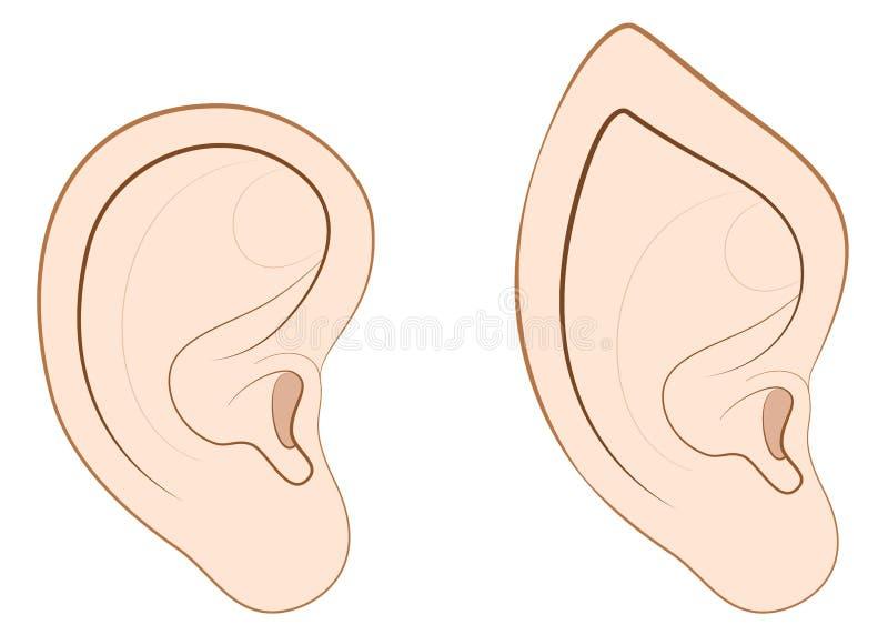 Comparación acentuada del duende del oído del oído humano stock de ilustración