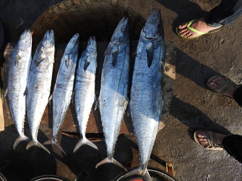 Comparación del tamaño de los pescados imagenes de archivo