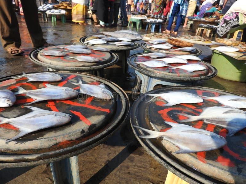 Comparación del tamaño de los pescados foto de archivo libre de regalías