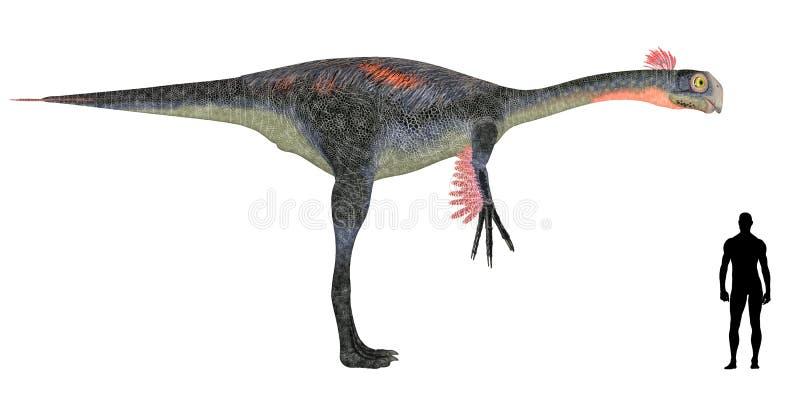 Comparaison de taille de Gigantoraptor illustration de vecteur