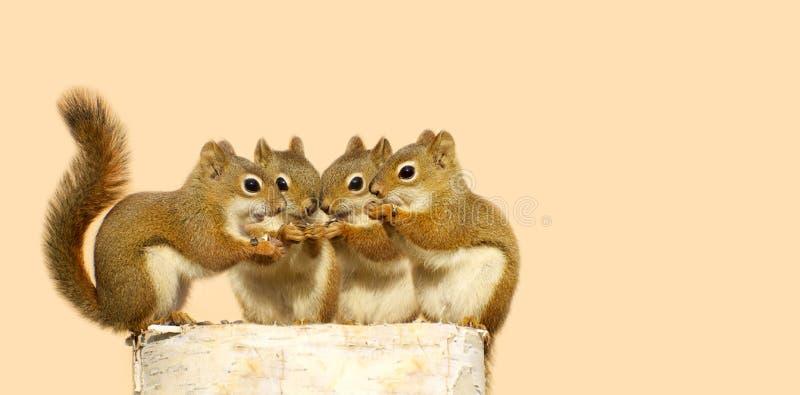 Compartecipazione degli scoiattoli del bambino. fotografie stock libere da diritti