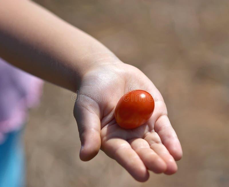Download Compartecipazione Del Pomodoro Fotografia Stock - Immagine di rosso, mangi: 207024