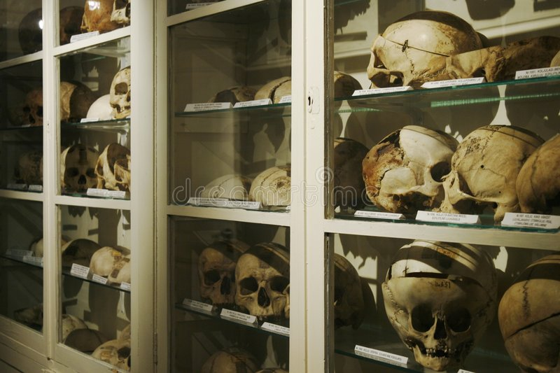 Compartiment avec les crânes humains images libres de droits