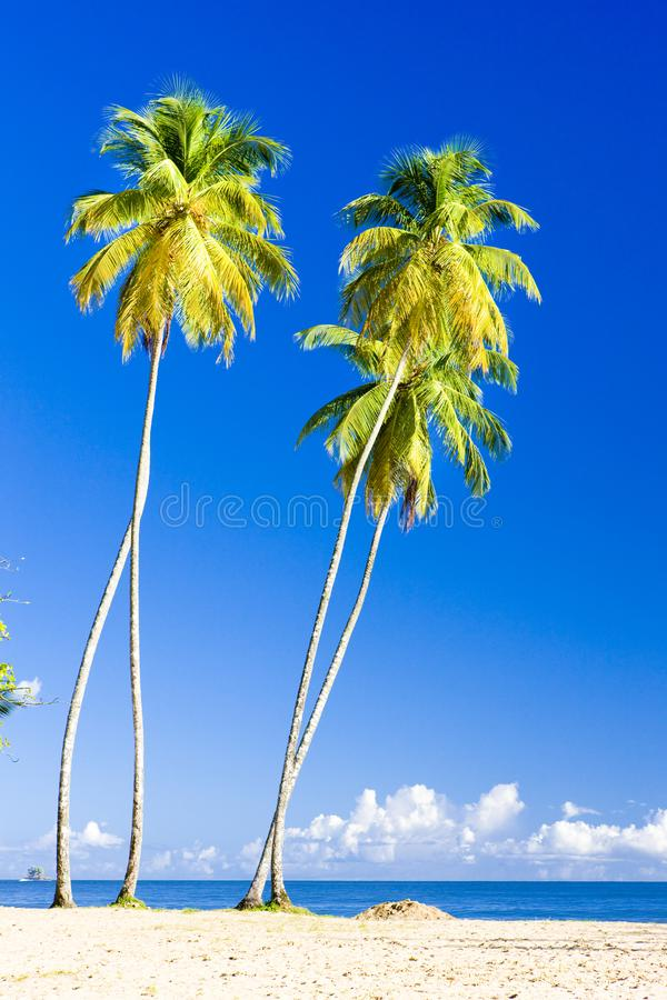 Compartiment de Maracas, Trinidad photographie stock