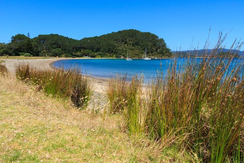 Compartiment des îles, Nouvelle Zélande Plage sur l'île de Motuarohia photographie stock libre de droits