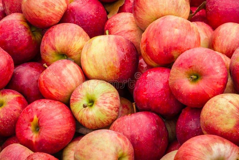 Compartimiento de Apple imagen de archivo libre de regalías