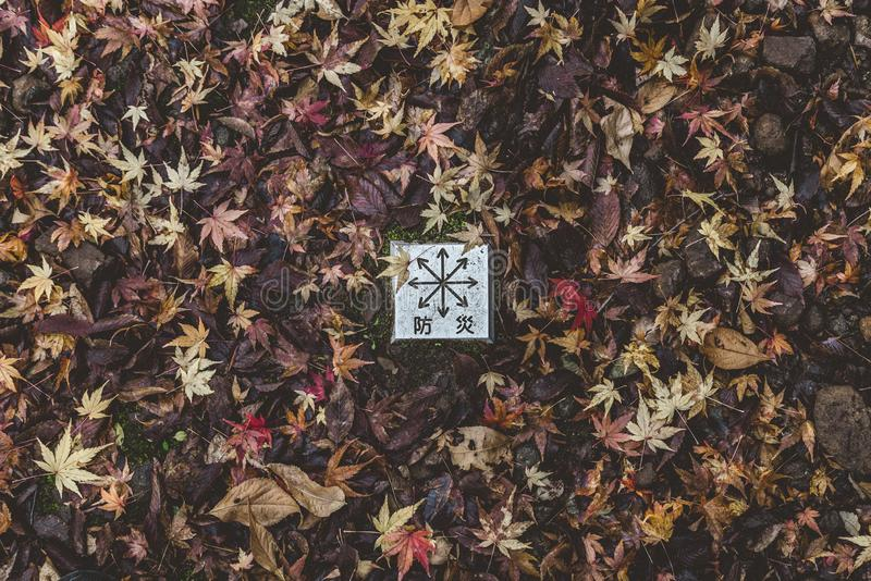 Compass on the Autumn leaves in Japan. Encompassing that where-ever you go, you`ll find beauty as its nice to be free within nature stock photo