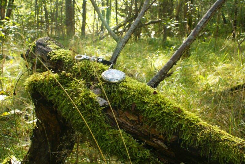 Compasso na floresta foto de stock royalty free
