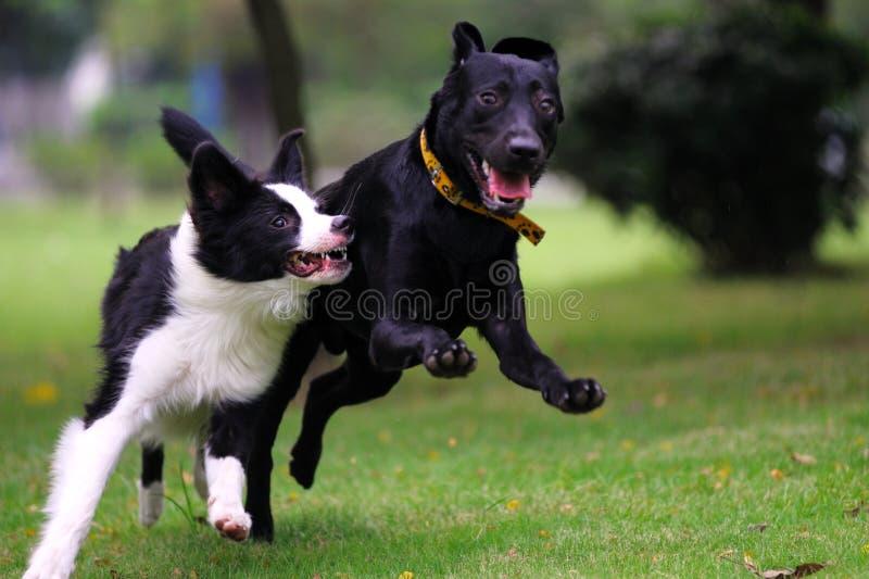 Competência de cães fotos de stock