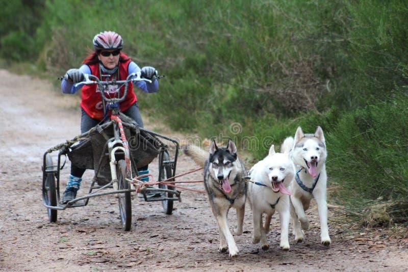 Download Competência Do Trenó Do Cão Imagem de Stock Editorial - Imagem de highland, mushing: 65579379