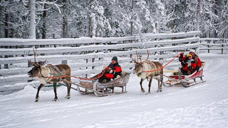Competência na rena sledges3 imagem de stock royalty free