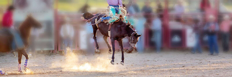 Competencia Bucking del rodeo del montar a caballo fotografía de archivo