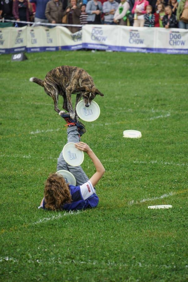 Competencia de Dogfrisbee en Varsovia, Polonia imagenes de archivo